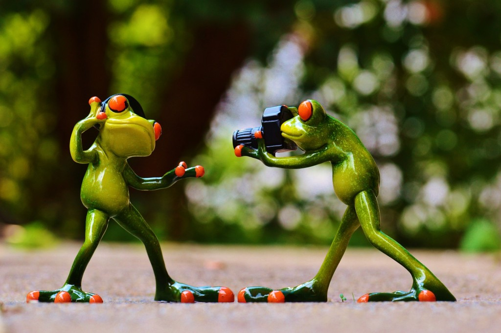 frogs-903167_1920